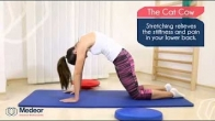The Cat-Cow Stretching Exercise