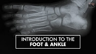 Intro to the Foot & Ankle   Dr. Carr Vineyard   Top10MD